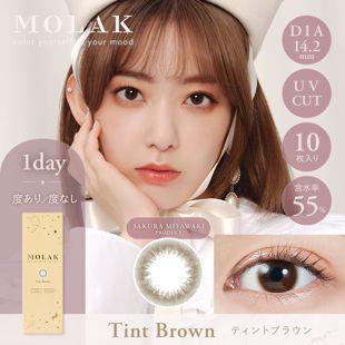 MOLAK MOLAK ワンデー UV  10枚/箱 (度なし) ティントブラウン の画像 0